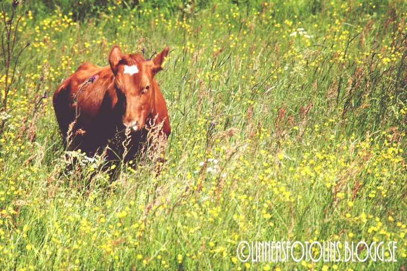 Paradise Summer Countryside Animal http://linneasfotolins.blogg.se