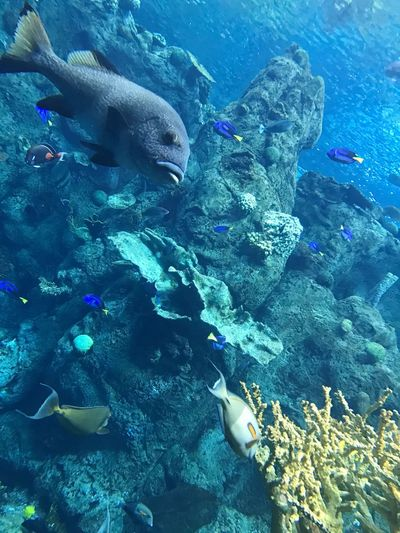 Fish Underwater Animal Themes Large Group Of Animals Sea Swimming Water School Of Fish Sea Life Aquarium Animal Wildlife UnderSea Beauty In Nature Coral Nature No People Day Indoors