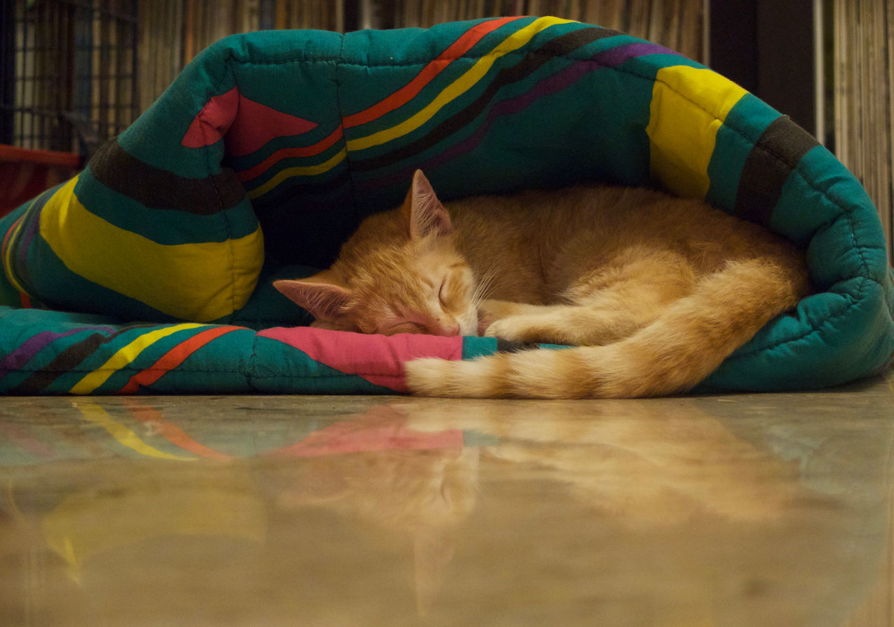 Animal Themes Cat Comfortable Domestic Animals Domestic Cat Feline Lying Down Relaxation