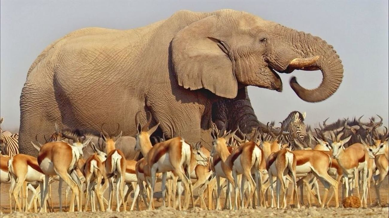 What a shot!! Credit to BBC NATURE. Watching the show Africa on BBC1. David Attenborough