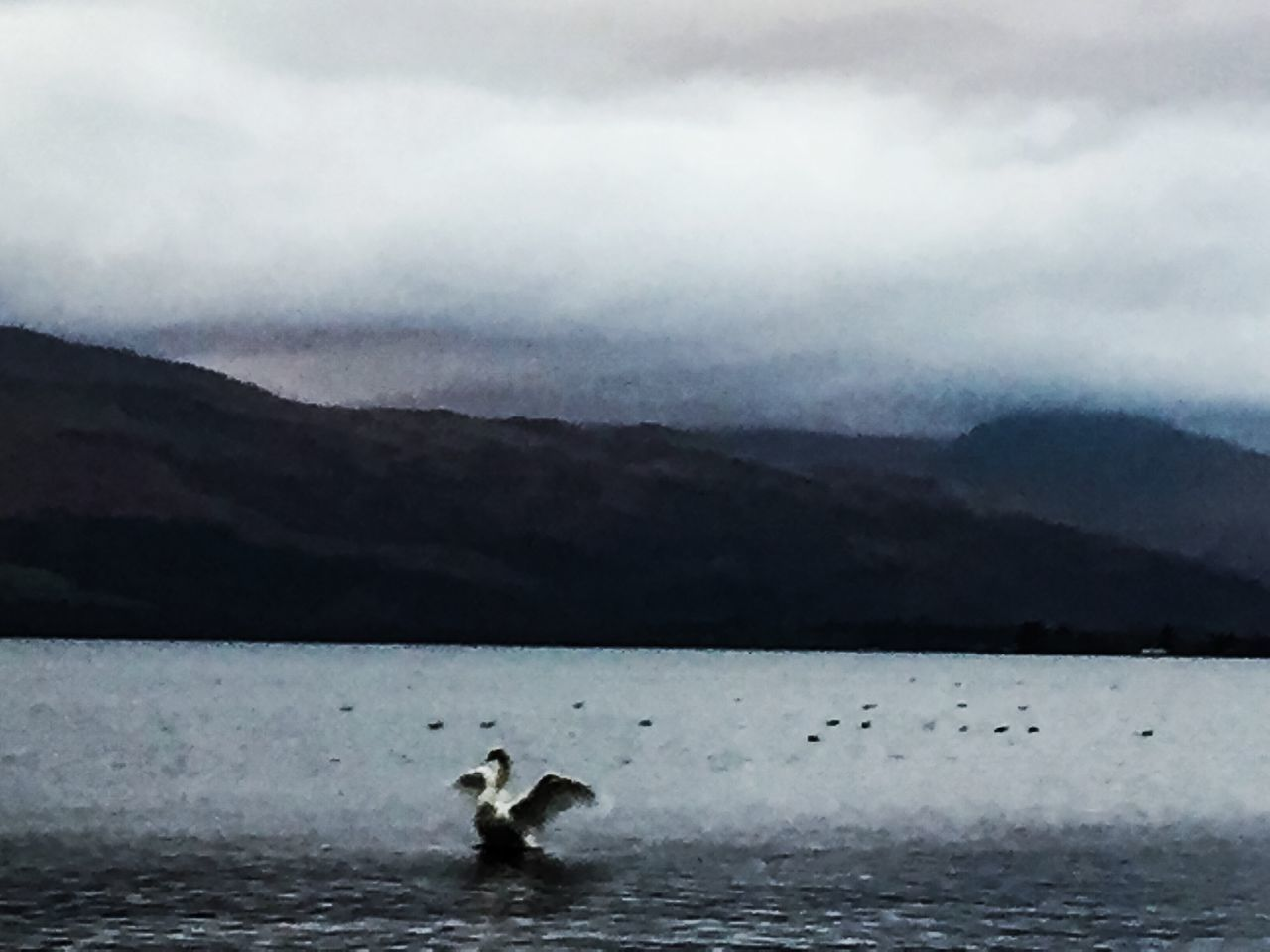 Today In Scotland Animal Bird Wildlife Water Waterfront LochLomond Sky Nature Tranquil Scene Swan Mountain Range Cloud - Sky Dramatic Edit Outdoors Day No People
