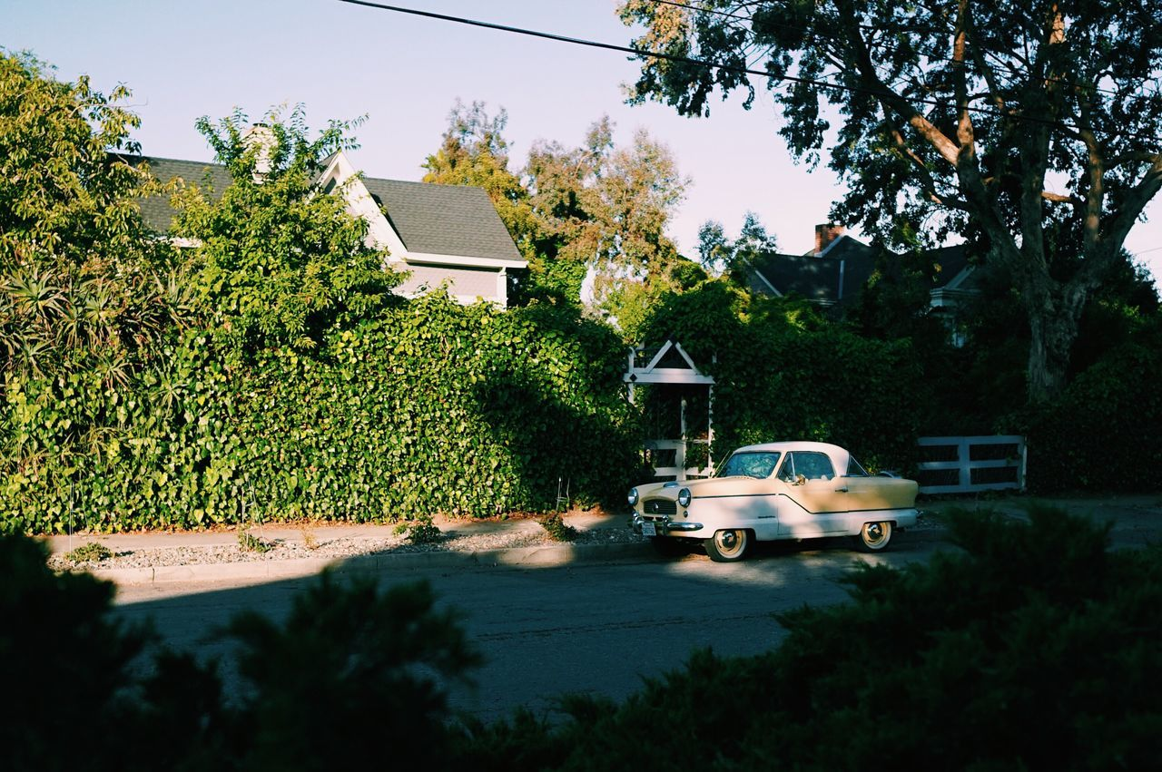 Santa Cruz, CA // Tree Car House Transportation Built Structure Land Vehicle Mode Of Transport Architecture Building Exterior Day Outdoors No People Plant Growth Nature