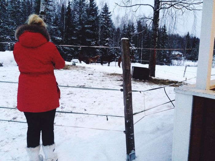 My bff and the meats Horses Winter Finnish  Finland