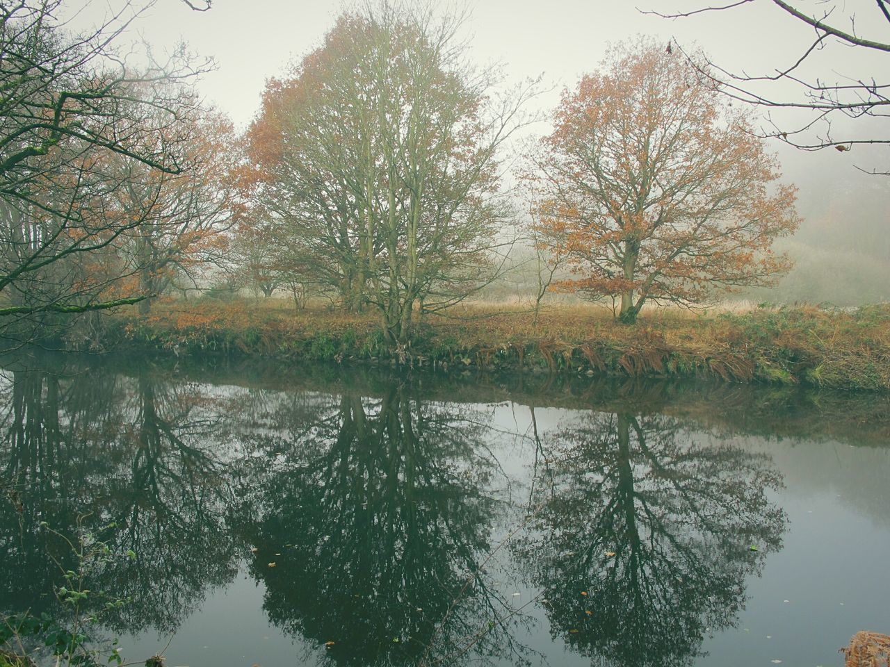 Foggy Morning Tranquil Scene Valleys Reflection EyeEmbestshots Fineartphotography Cold Temperature Frosty Days River Bank  Foggymornings Beauty In Nature Landscape Water Woodlands Change No People Scenics Non-urban Scene Tranquility Fog Outdoors Reed - Grass Family Autumnbeauty Autumn Leaves WoodLand Rural Scene