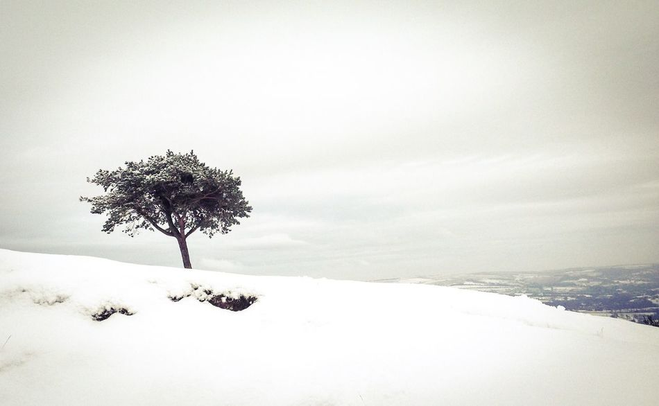 Tree In Snow Hill Hiking Nature Outdoors Landscape Peak District Northern England Castleton Angle View