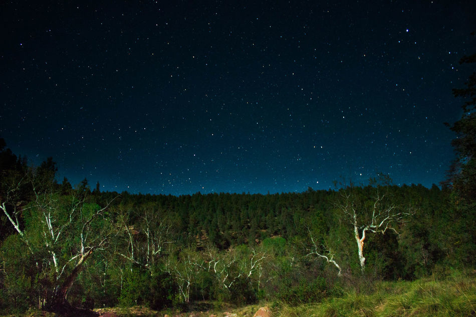 Abundance Beauty In Nature Camping Field Growth Light Trails Long Shutter Majestic Nature Night No People Non Urban Scene Non-urban Scene Outdoors Remote Scenics Sky Solitude Star - Space Star Field Tranquil Scene Tranquility Tree Wide Angle WoodLand