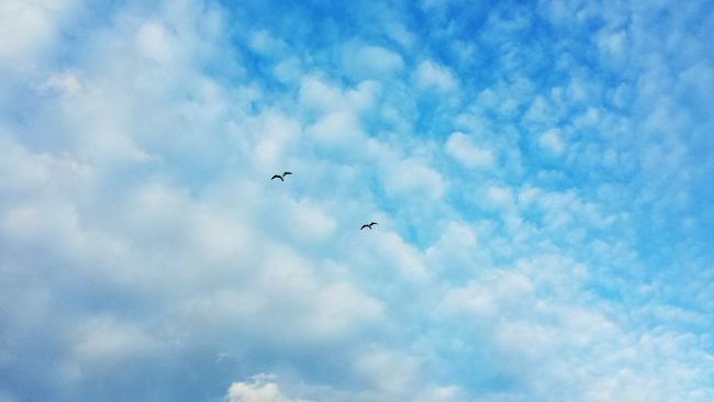 Birds Flighing High Together in the Sky Hope Dream Free High Top Cellphone Photography