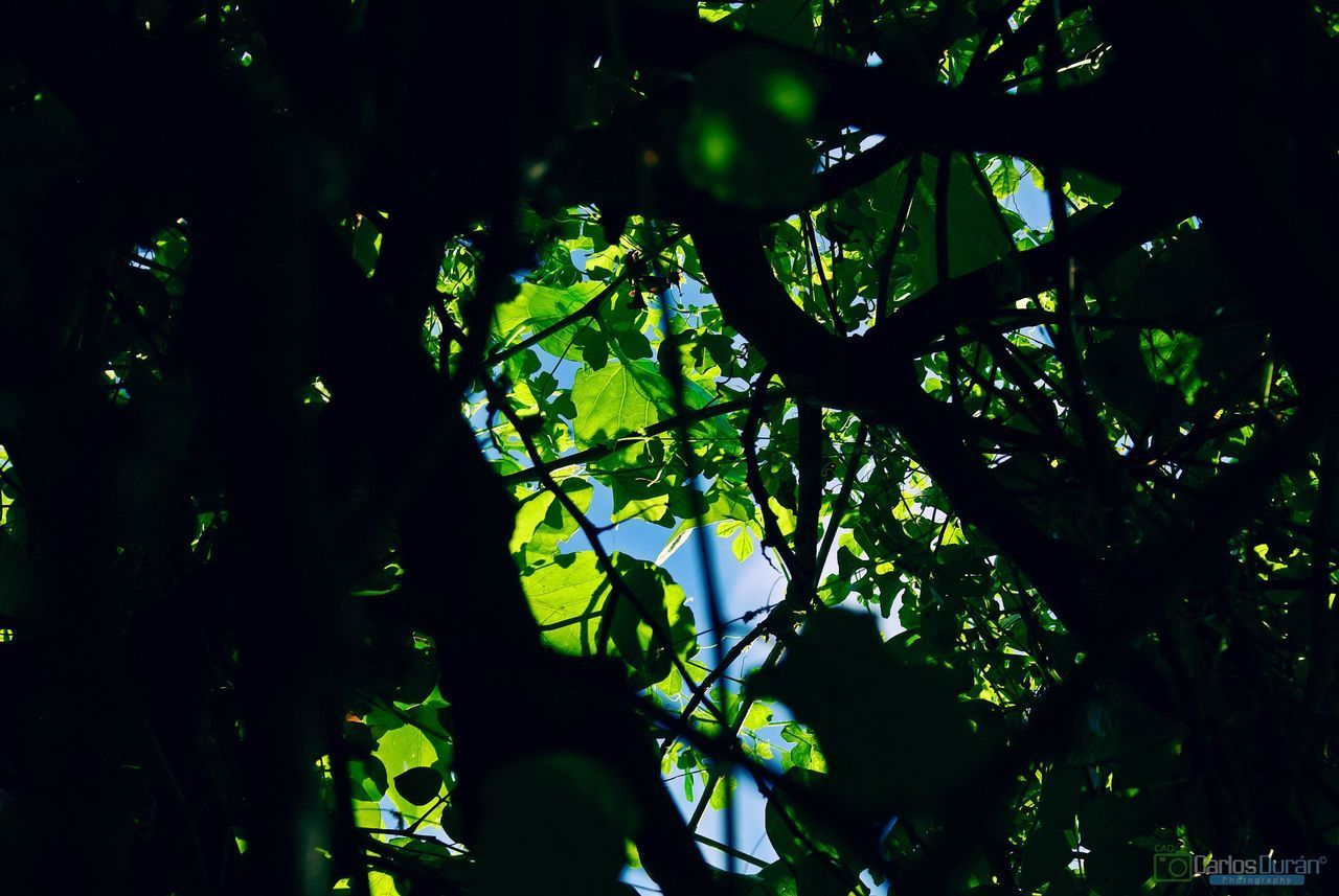 tree, low angle view, nature, growth, branch, beauty in nature, no people, tranquility, outdoors, sky, night