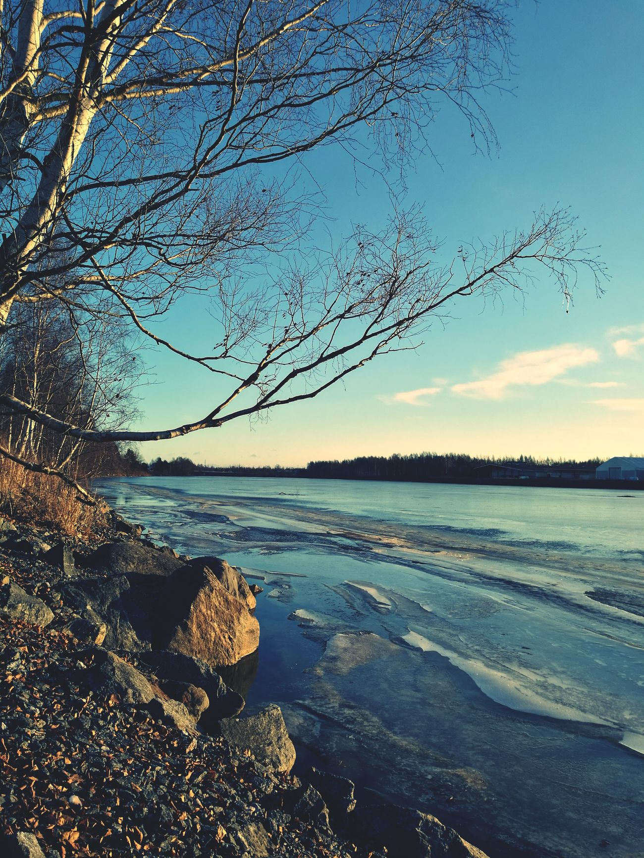 Tree Silhouette Iced River ❄ Stones & Water Riverbank Daytime No People Outdoors