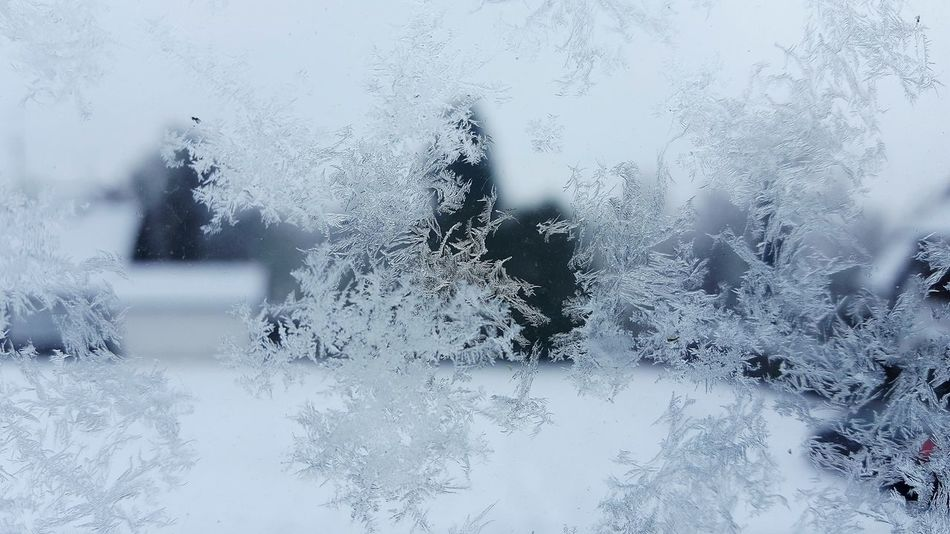 Ice Crystal Cold Temperature EyeEm Nature Lover The Week Of Eyeem Winter Enjoy The View Eyem Gallery EyeEm Around The World Winter Wonderland EyeEm Gallery Enjoying The Moment Beauty In Nature Snowcristals  Frozen Window