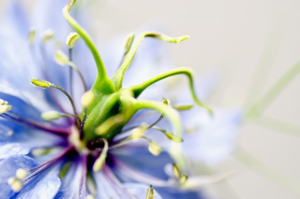 Beautiful stock photos of macro, Botany, Day, Detail, Flower