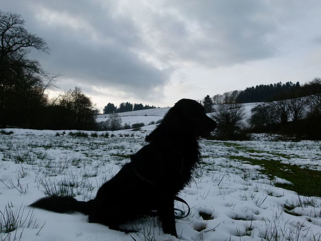 EyeEmNewHere Shades Of Winter Cold Temperature Snow One Animal Winter Dog Nature Animal Themes Tree Forest Cloud - Sky No People Pets Outdoors Domestic Animals Beauty In Nature Mammal Sky Day Close-up
