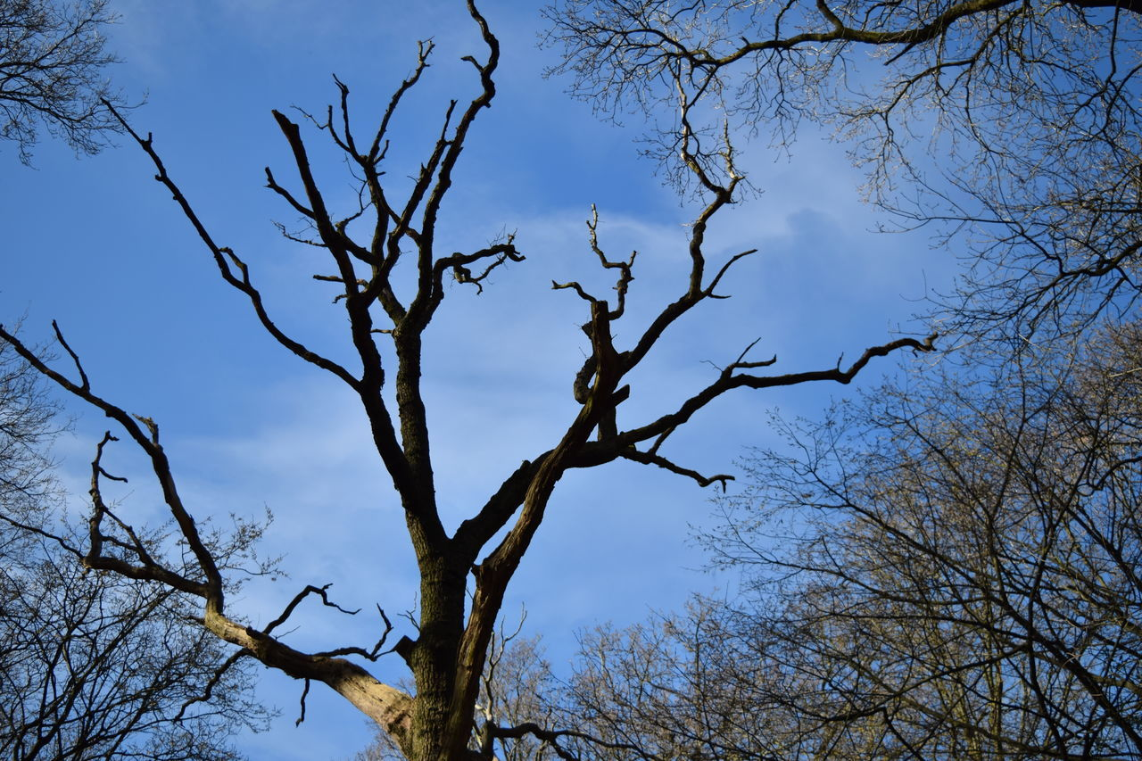 Tree Sky Sunset Branch Nature Outdoors No People Beauty In Nature Scenics Day Contrast Blue Sky Tree Branches Against The Sky NIKON D5300 Hampstead Heath Nikonphotography Nature Photography Lightning Tree