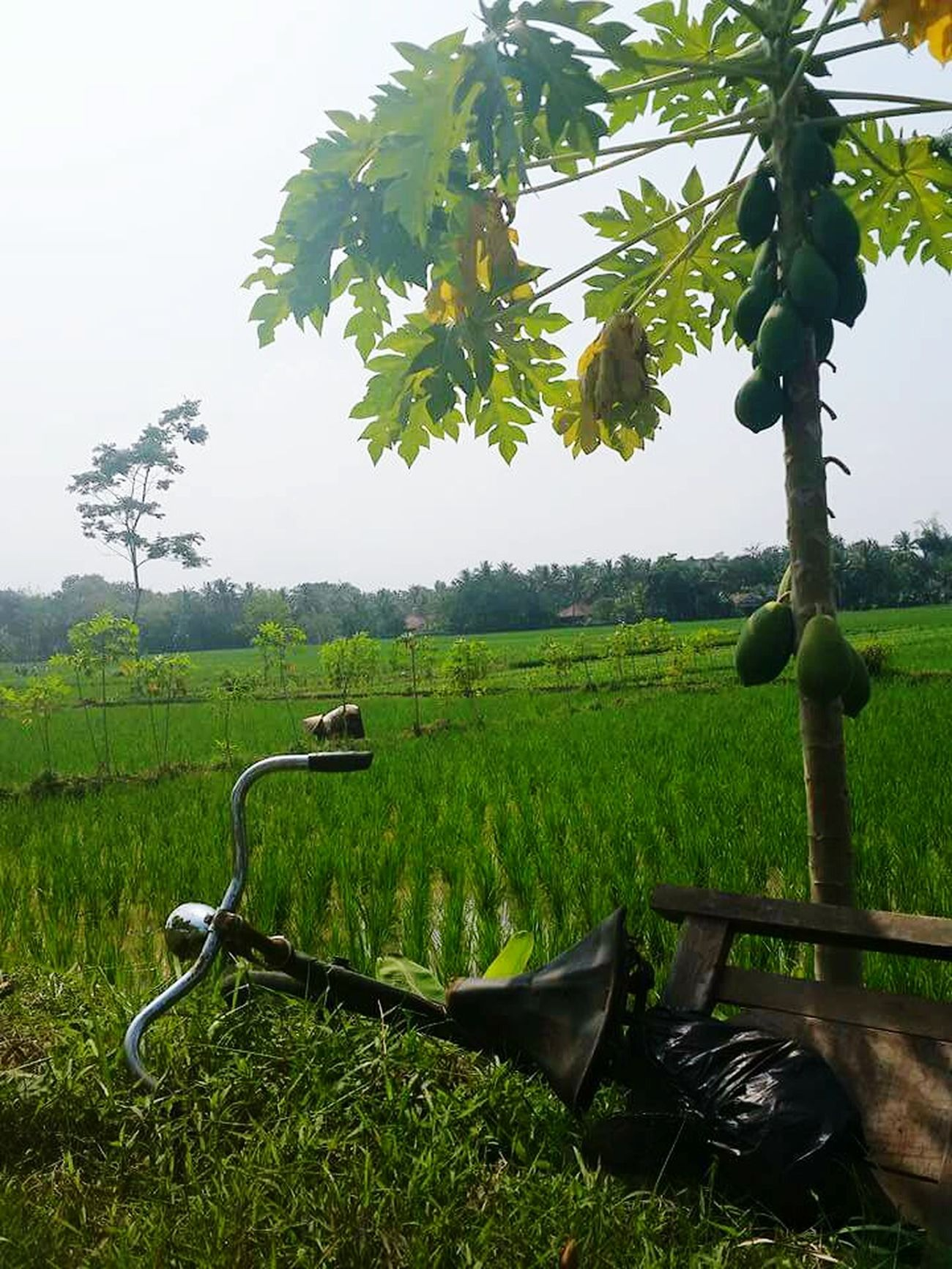 Meaningfull Properties Usefull Bicycle Simple Wisdom Around Us