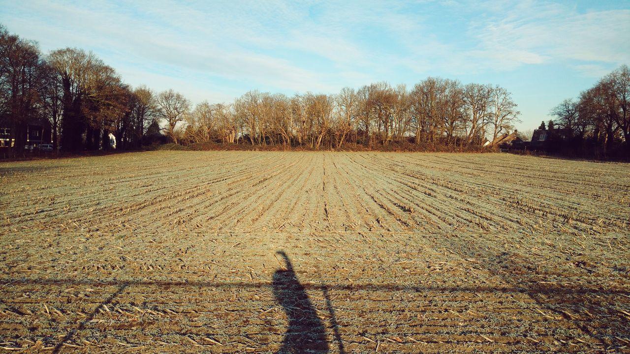 Field Corn Sky Growth Fields Of Gold Outdoors Corn To Grow Shadow In Field Shadowplay