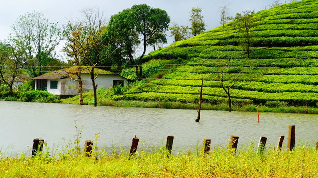 Nature_perfection Kerala Traveler Green Nature India Phtooftheday Peaceful Travelgram Journey vagmon,idduki,kerala