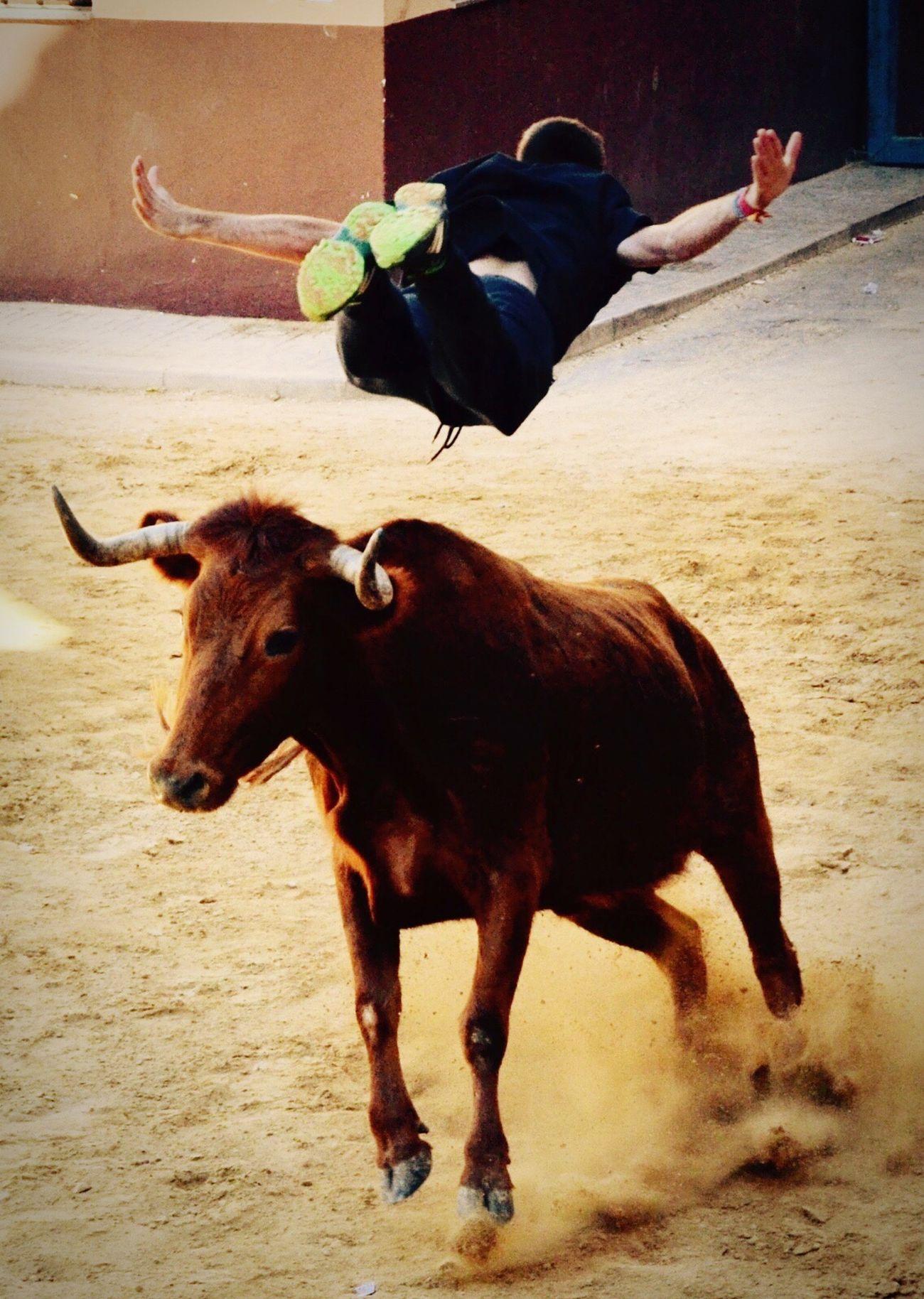BULLS NATION  Bulls ❤ BULLS!! Summertime Taking Photos