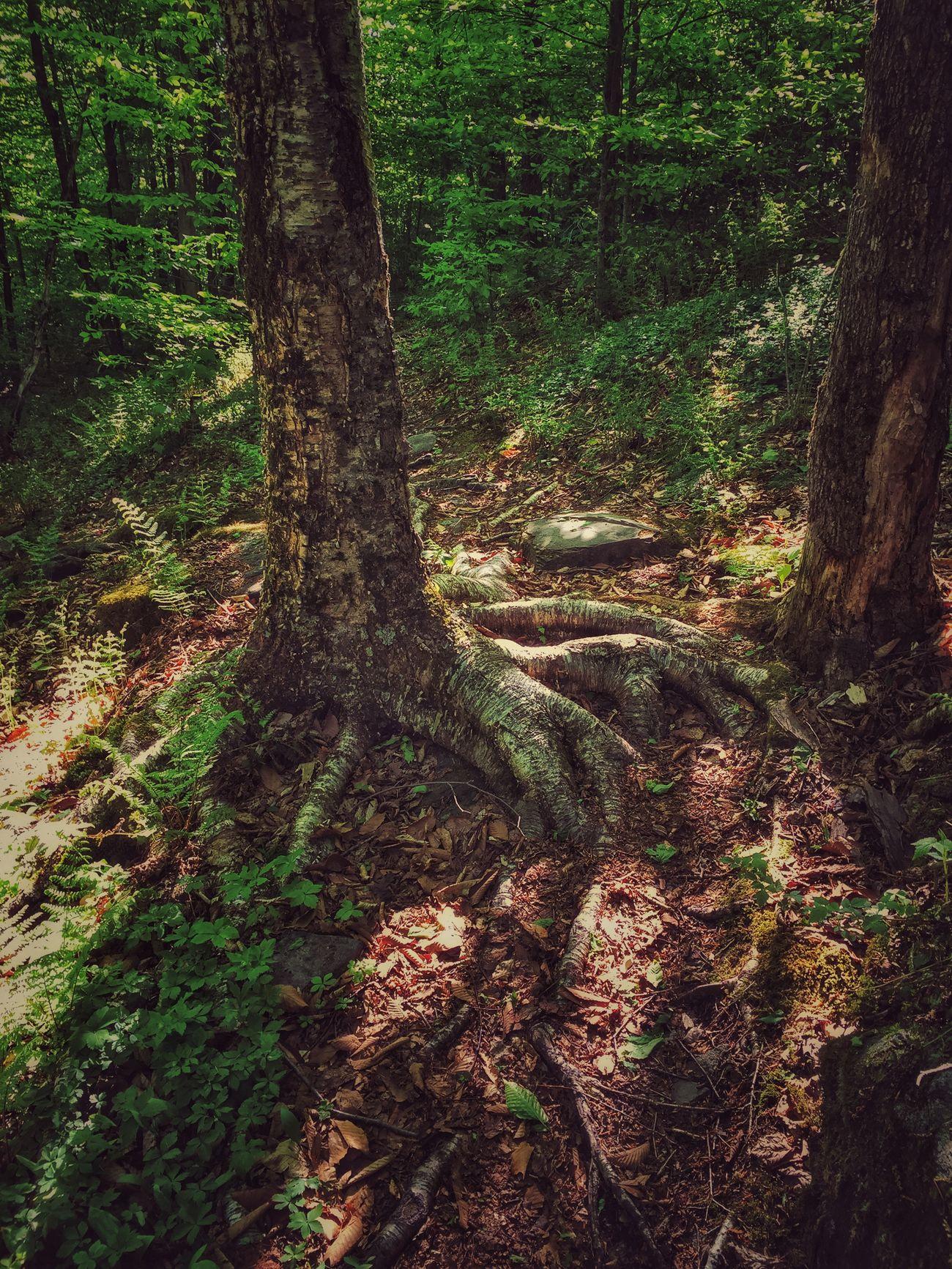 Mountain Climbing Tree Trees Tree Roots