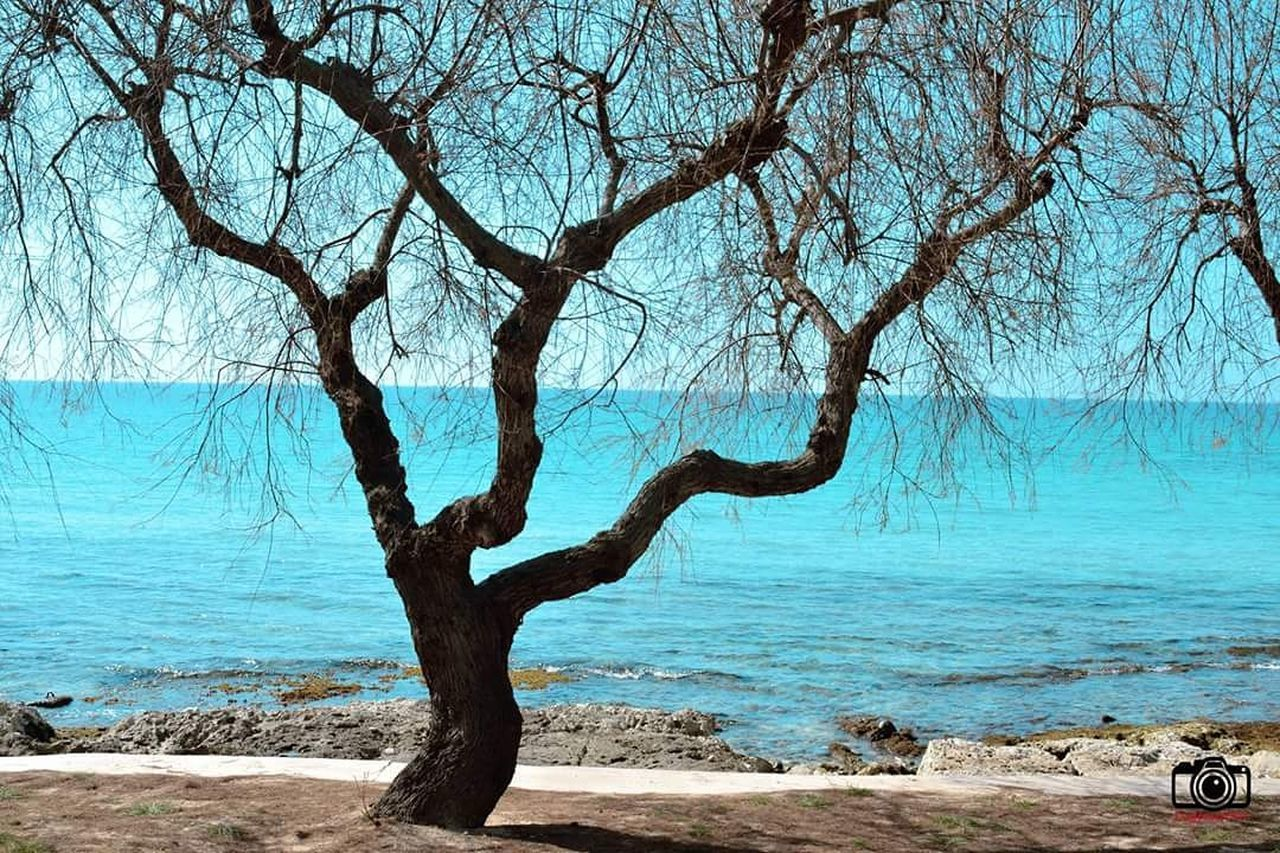 tree, bare tree, nature, branch, tranquility, tree trunk, beauty in nature, sea, outdoors, tranquil scene, scenics, day, water, no people, landscape, beach, horizon over water, dead tree, sky