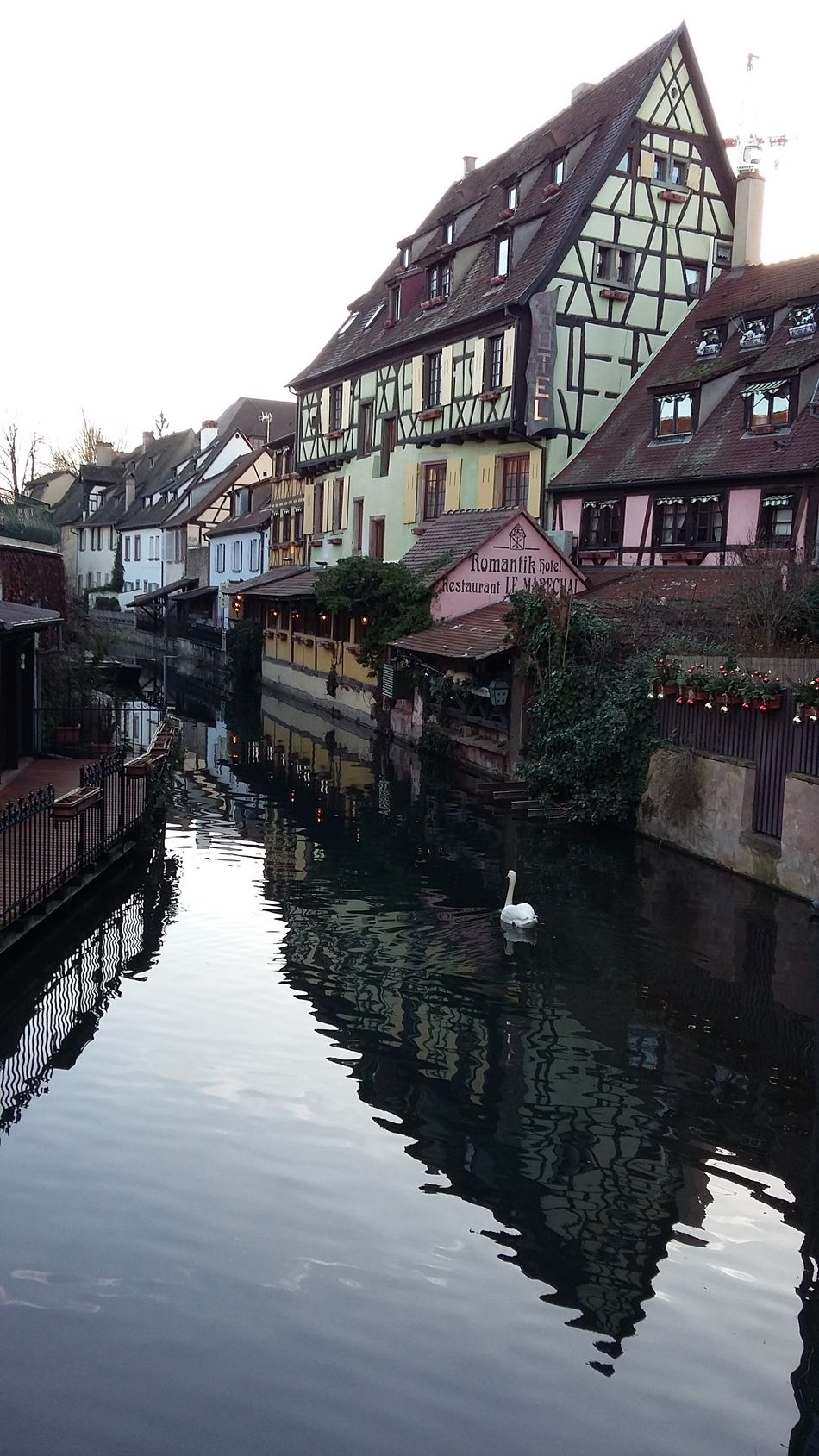 Water Reflection Outdoors Swans Colmar, Alsace, France Winter Sunny Day River Bridge Waterfront Lake No People City Building Exterior Sky Architecture Bridge - Man Made Structure Day