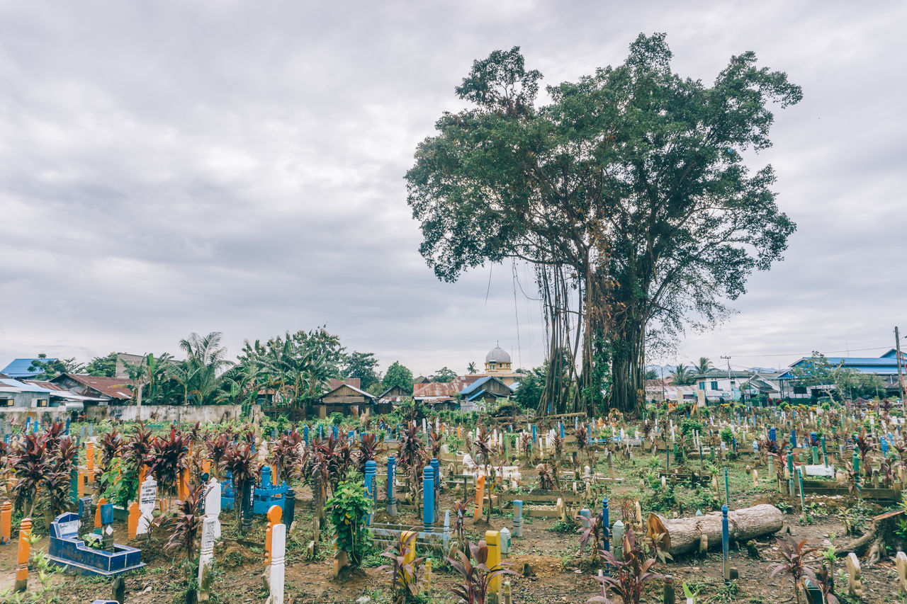 Huge Lonely Tree at Cemetery Cemetery Cloudy Cloudy Skies Cloudy Sky Day EyeEmNewHere Full Length Landscape Large Group Of Objects Lonely Masjid Mosque Multi Colored Nature Outdoors Tree