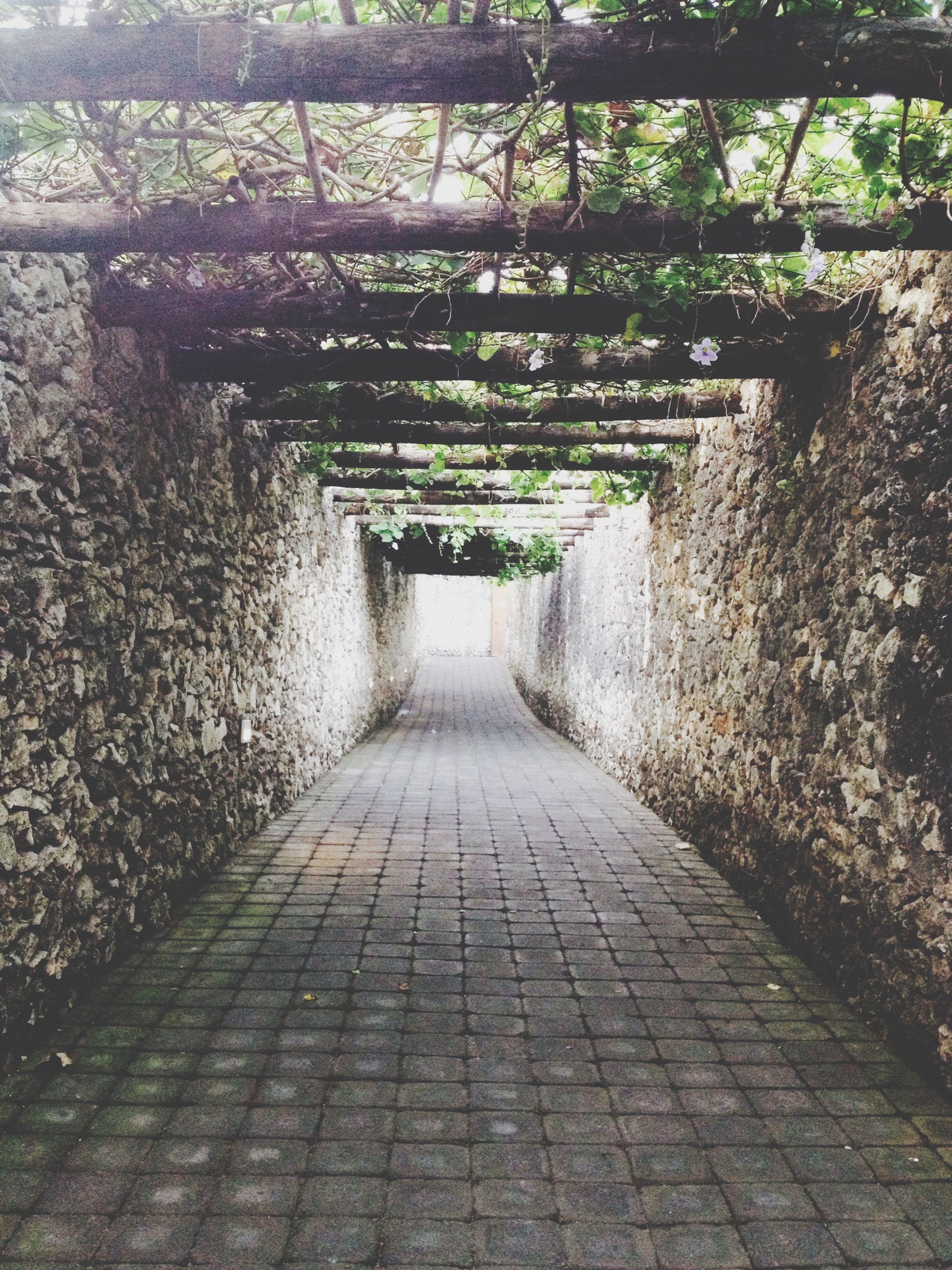 the way forward, tree, footpath, diminishing perspective, walkway, growth, pathway, vanishing point, green color, plant, narrow, cobblestone, nature, tranquility, built structure, park - man made space, in a row, day, sunlight, outdoors
