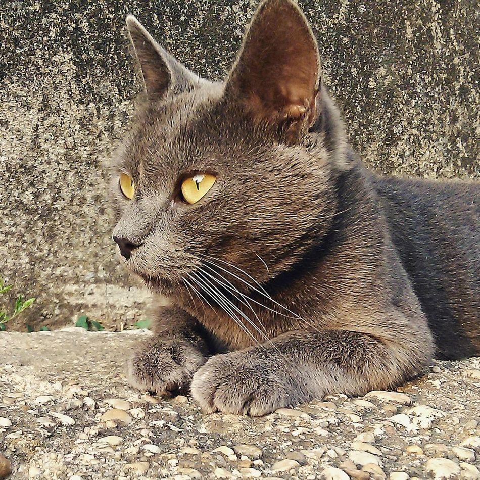 Cat Sundown Summer Eyes First Eyeem Photo