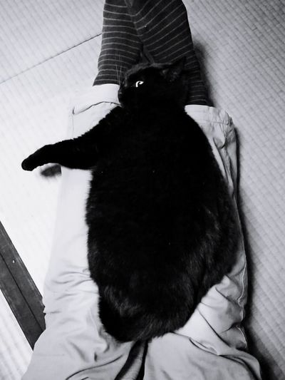 black cat on the knee Black Cat Cute Lovely Cat Lover Cat Cat Lovers Relaxation Japanese Traditional House Tatami Black And White Human Legs One Animal Indoors  Domestic Animals Pets Animal Themes Mammal Portrait