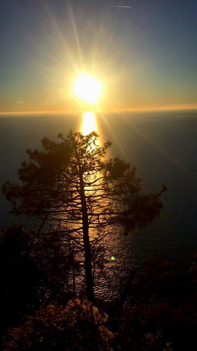 Light Sunset Peace Travel Sun Sea Tree Nopeople Enjoy Favourite Places Sky Colors Peaceful View Tranquility