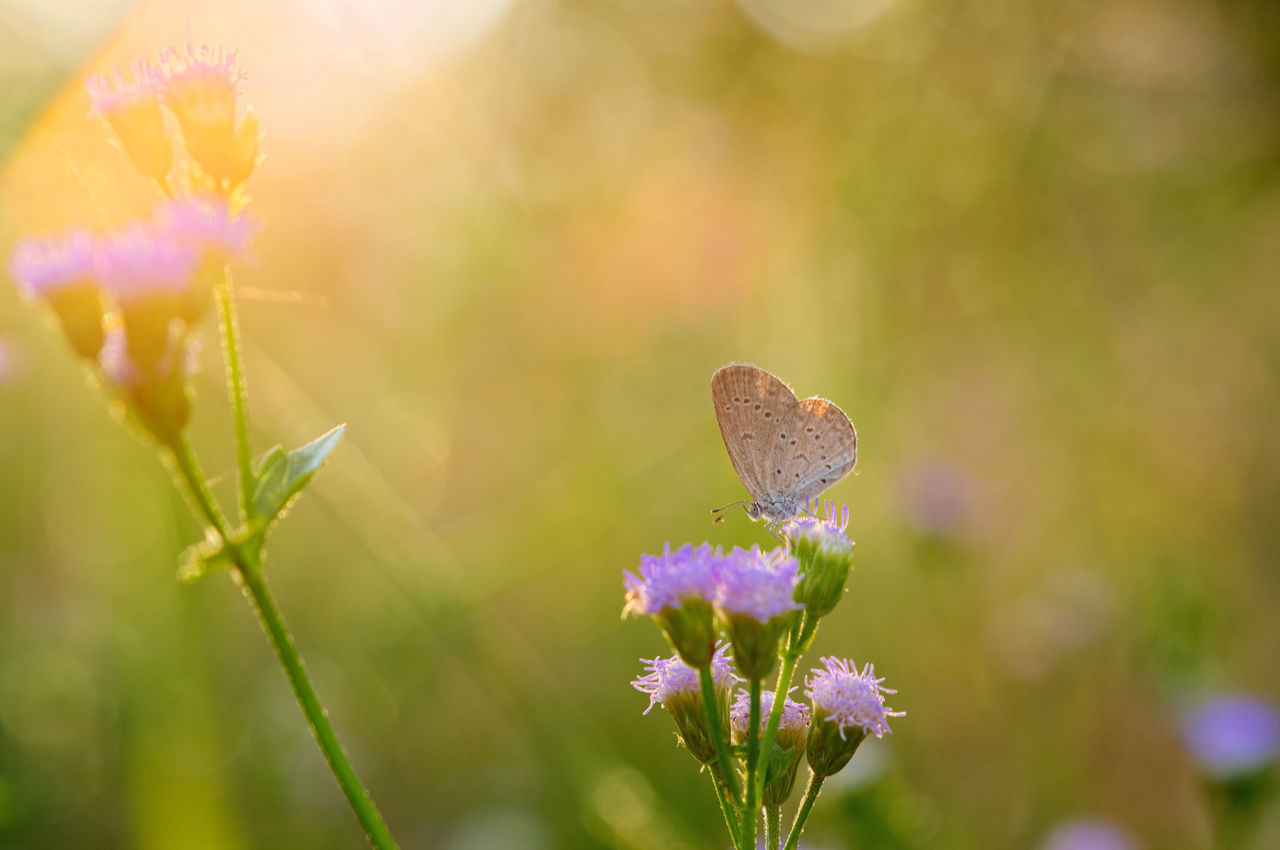 Beautiful stock photos of butterfly,  Animal Themes,  Animal Wildlife,  Animals In The Wild,  Blossom