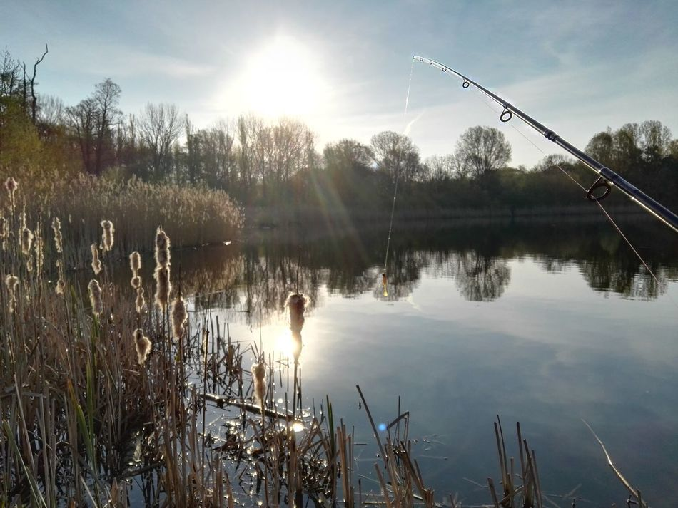Beautiful stock photos of engel, Beauty In Nature, Cropped, Day, Fishing Rod