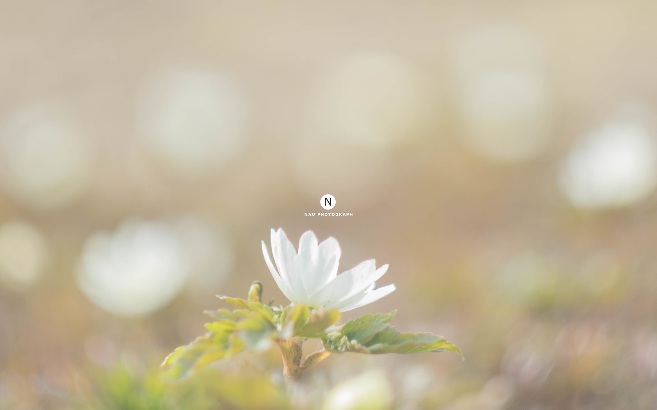 flower, fragility, one animal, insect, animals in the wild, nature, animal themes, focus on foreground, beauty in nature, plant, freshness, close-up, growth, day, animal wildlife, outdoors, flower head, no people, butterfly - insect, pollination, perching