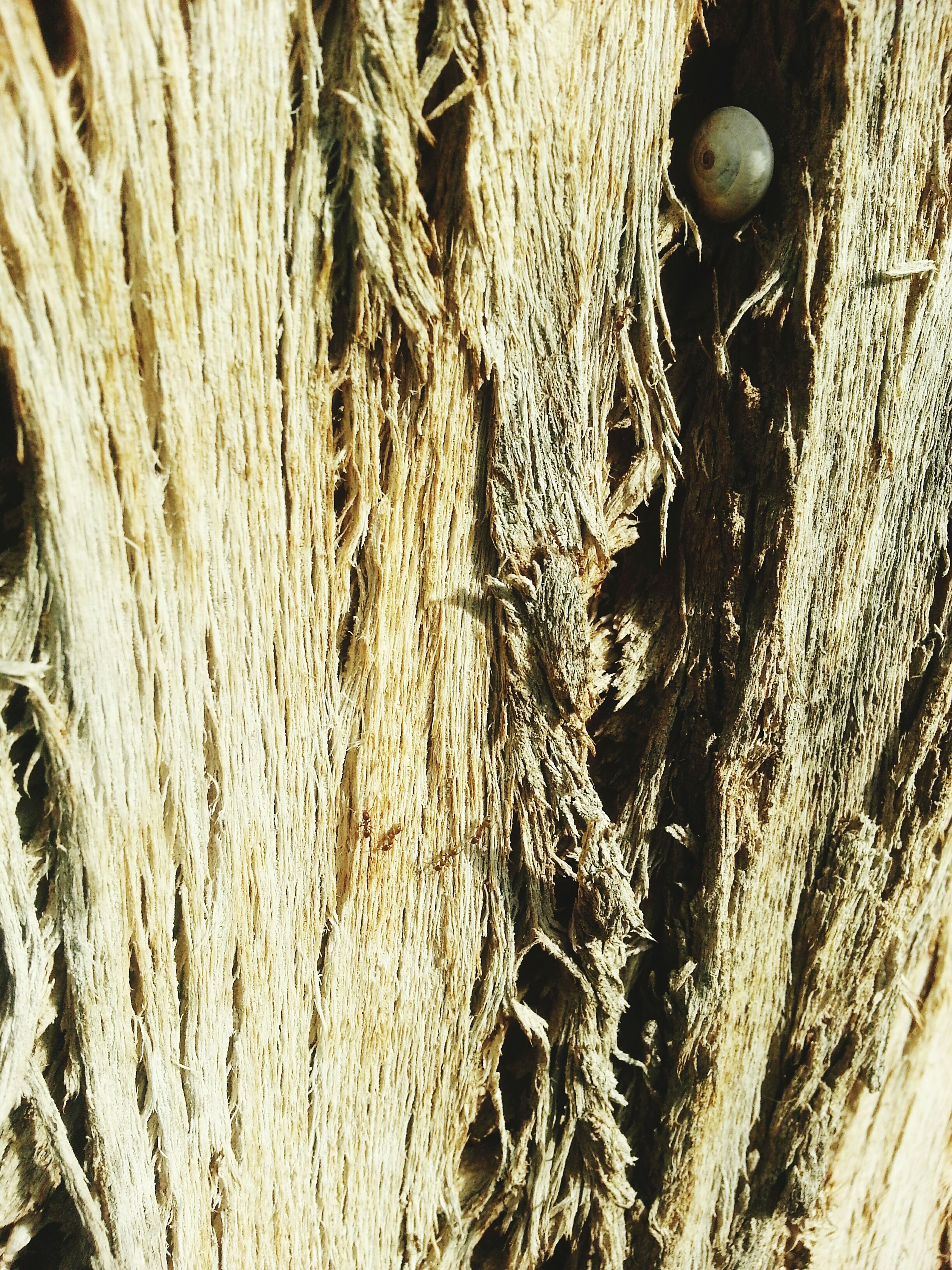 full frame, textured, close-up, backgrounds, wood - material, pattern, natural pattern, tree trunk, detail, nature, no people, wood, rough, brown, outdoors, day, high angle view, bark, part of
