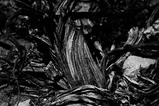 Beauty In Nature Close-up Died Growth Joshua Tree National Park Natural Pattern Nature Nature Plant Remains Selective Focus Wood Wooden