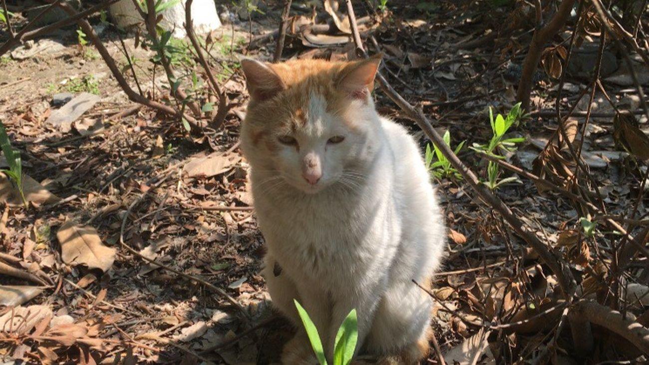 Cat♡ Cat Hello 😍😙😙😙😍😍😙😻😻😻