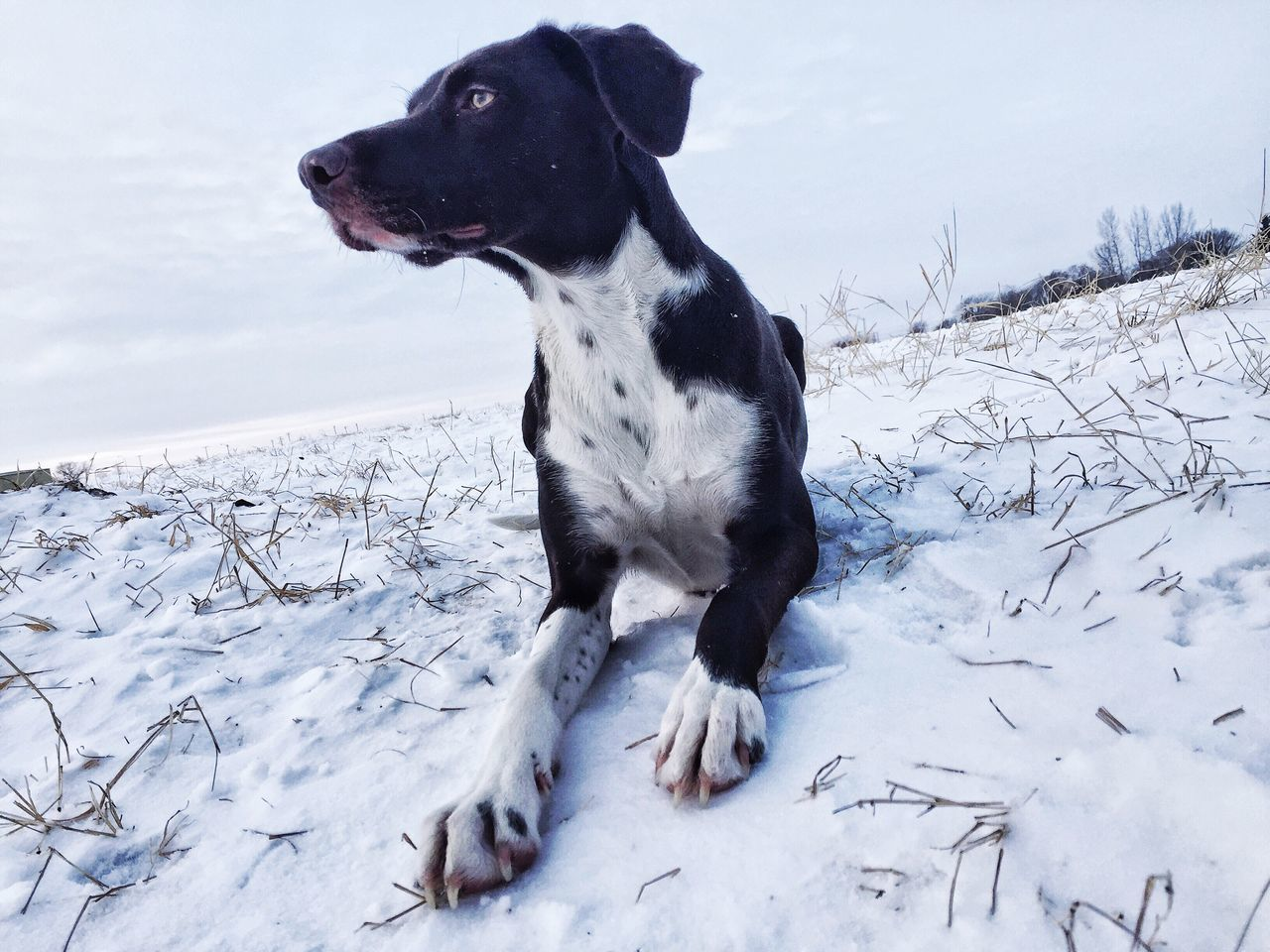 Dog Sitting On Snow Covered Field