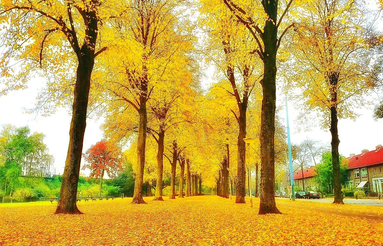 autumn, tree, change, leaf, beauty in nature, yellow, nature, tranquility, scenics, tranquil scene, outdoors, tree trunk, growth, day, no people, the way forward, branch, red, landscape, sky