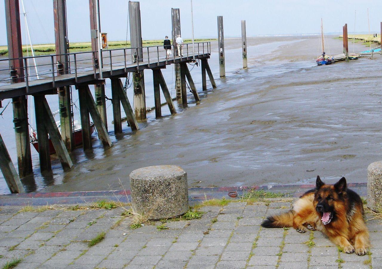 Beautiful stock photos of german shepherd, Animal Themes, Canine, Carnivora, Day