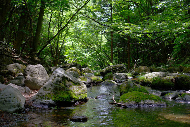 Waterfall and river at Nasu, Tochigi, Japan. Beauty In Nature Flowing Water Forest Japan Nature Non Urban Scene Non-urban Scene Outdoors Plant River Scenics Stream Tranquil Scene Tranquility Tree Water Waterfall