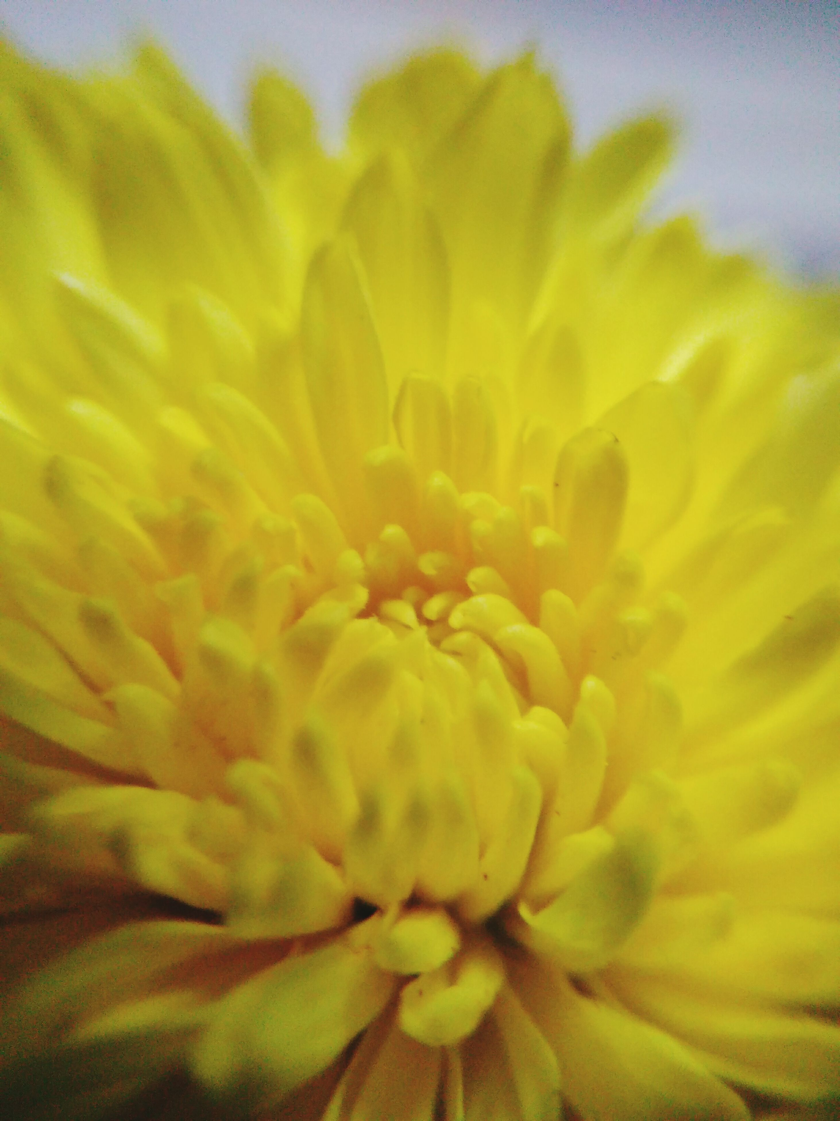 flower, freshness, petal, flower head, fragility, yellow, beauty in nature, growth, close-up, nature, single flower, pollen, blooming, focus on foreground, plant, stamen, in bloom, selective focus, extreme close-up, blossom