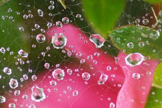 蜘蛛の糸 水滴 マクロ