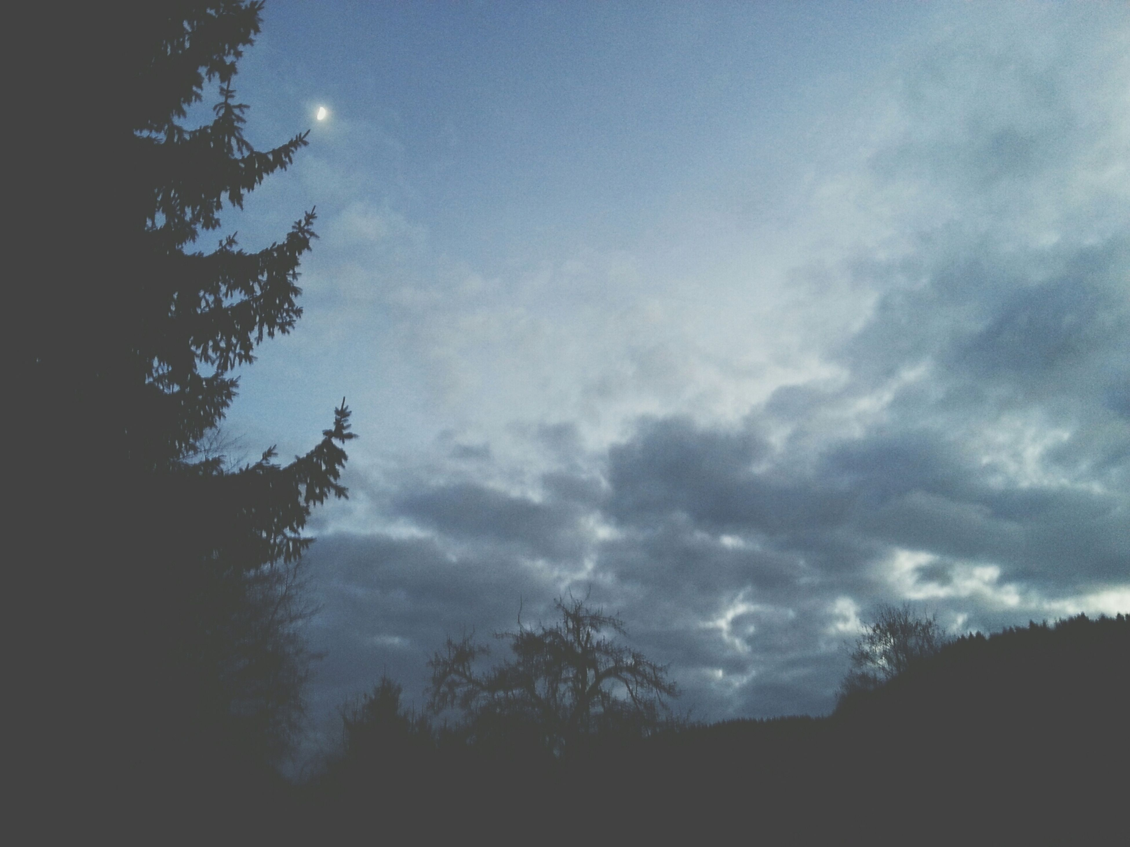 silhouette, sky, tree, tranquility, low angle view, beauty in nature, tranquil scene, scenics, cloud - sky, nature, cloudy, dusk, cloud, idyllic, outdoors, dark, no people, growth, weather, moon