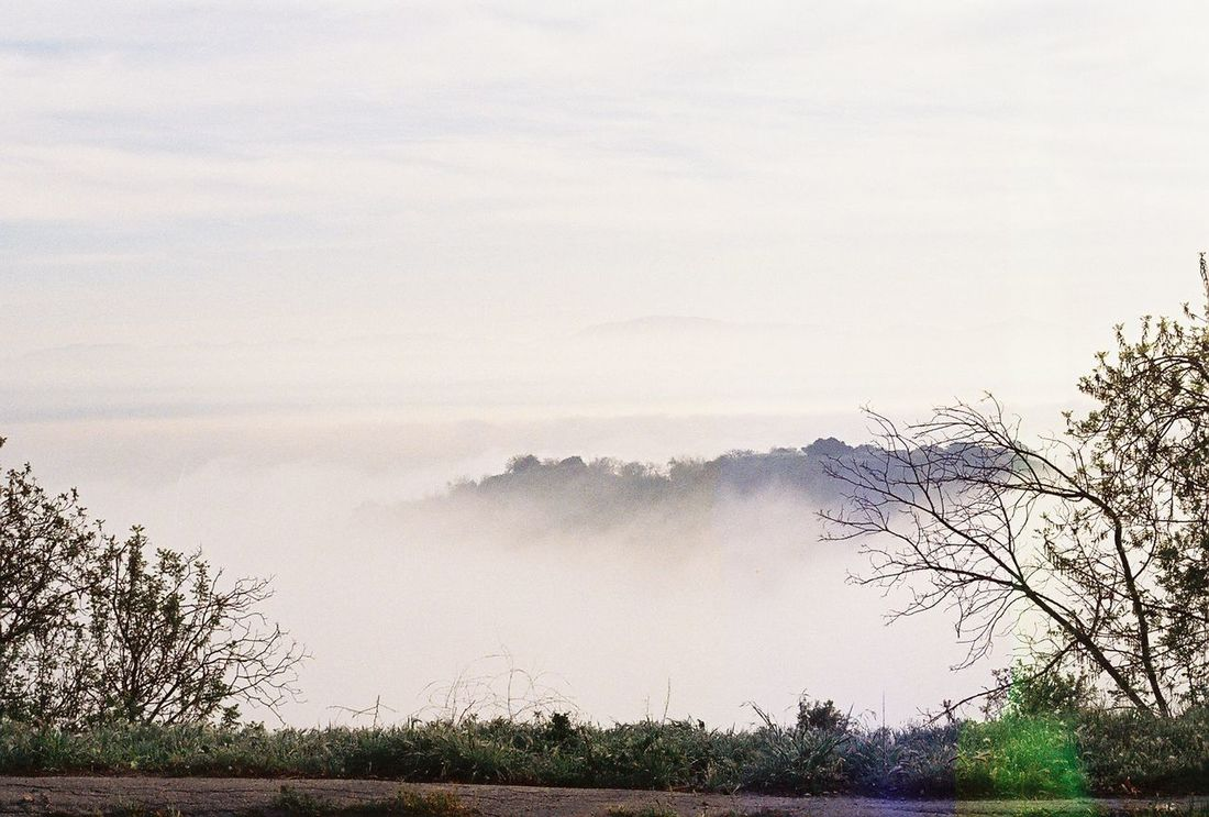 Fog Bank Los Angeles, California Beauty In Nature Fog Foggy Landscape Nature Tranquil Scene Tranquility