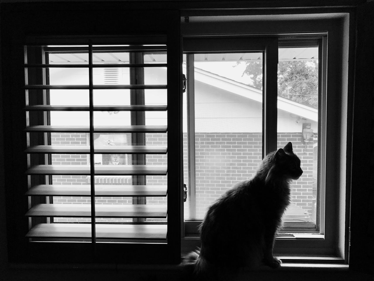 window, one animal, pets, animal themes, domestic animals, indoors, mammal, day, no people, dog, looking through window, domestic cat, close-up