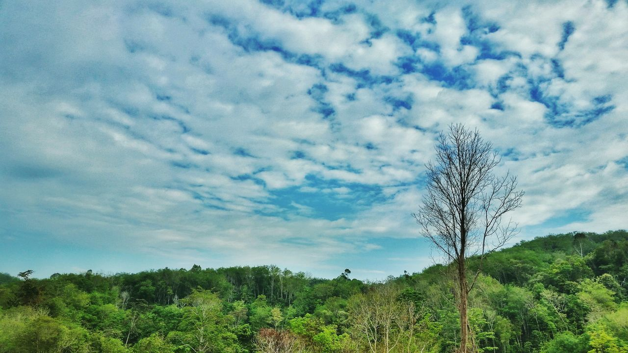 Sky And Cloud Collection Blue And Green Panorama Scenery Nature Tree Branches Tree Calmness Balance Borneo
