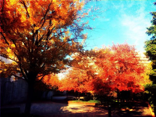 Autumn Leaves in the City Autumn Leaves In The City