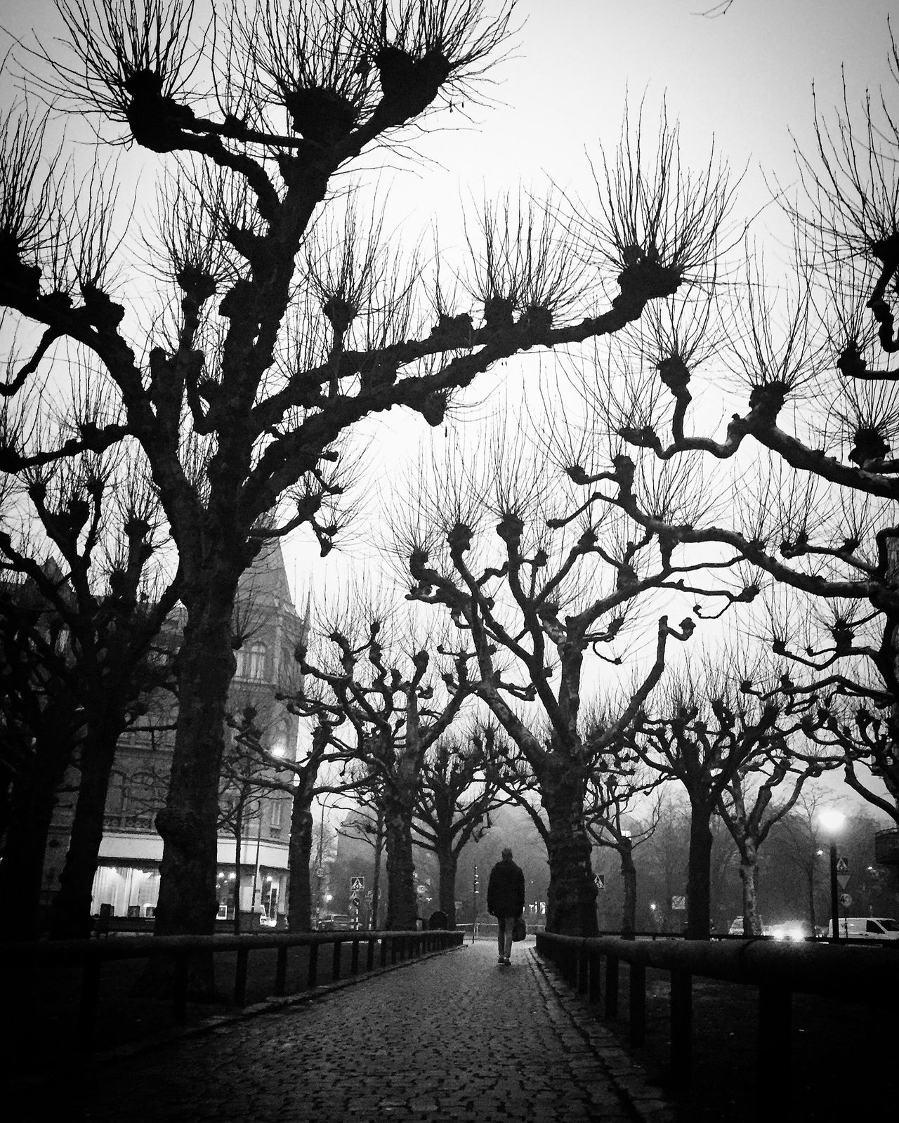 Tree Outdoors Bare Tree One Person Bw_collection Black And White Street Photography Shootermag