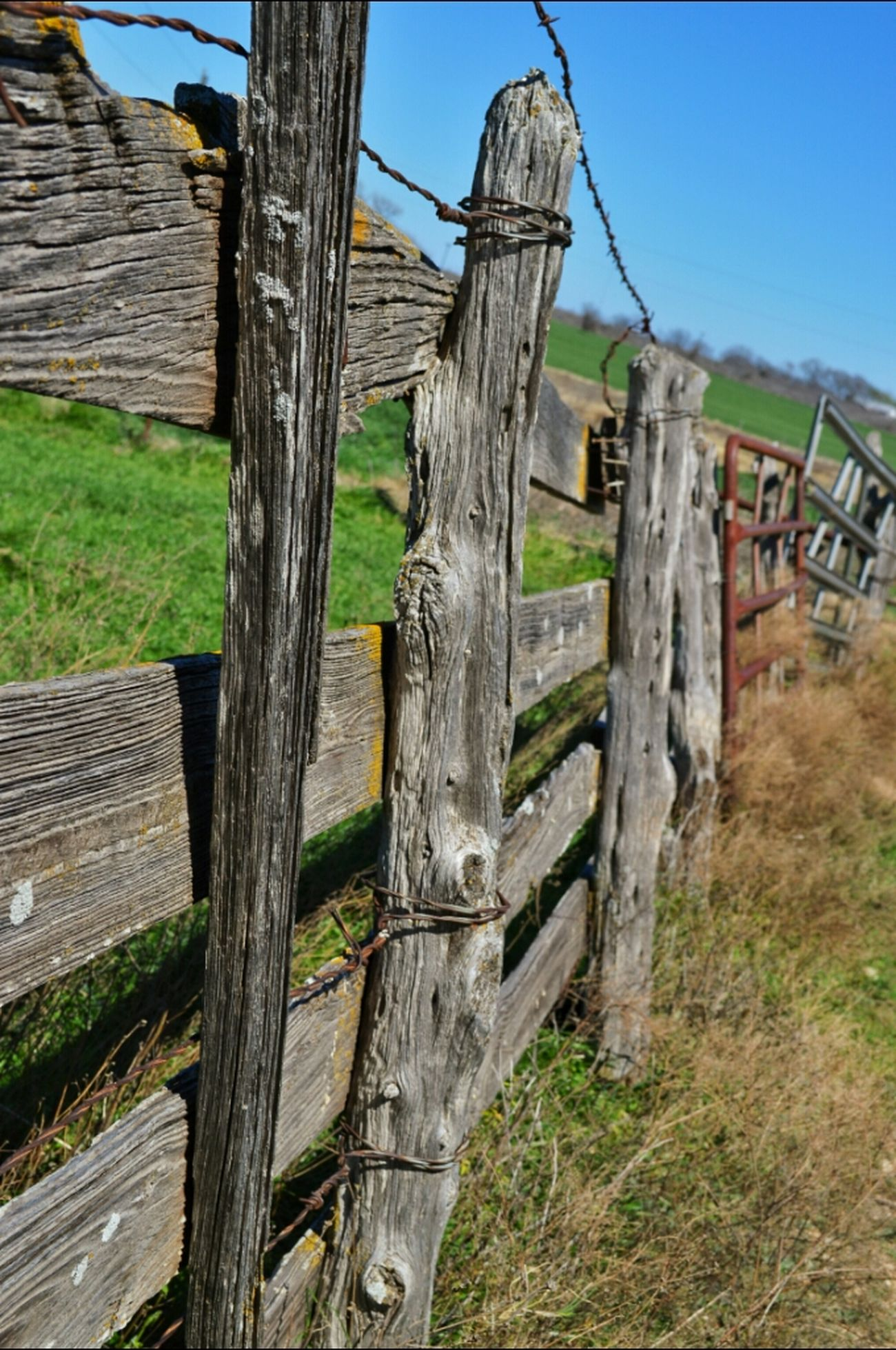 Fencepost Friday