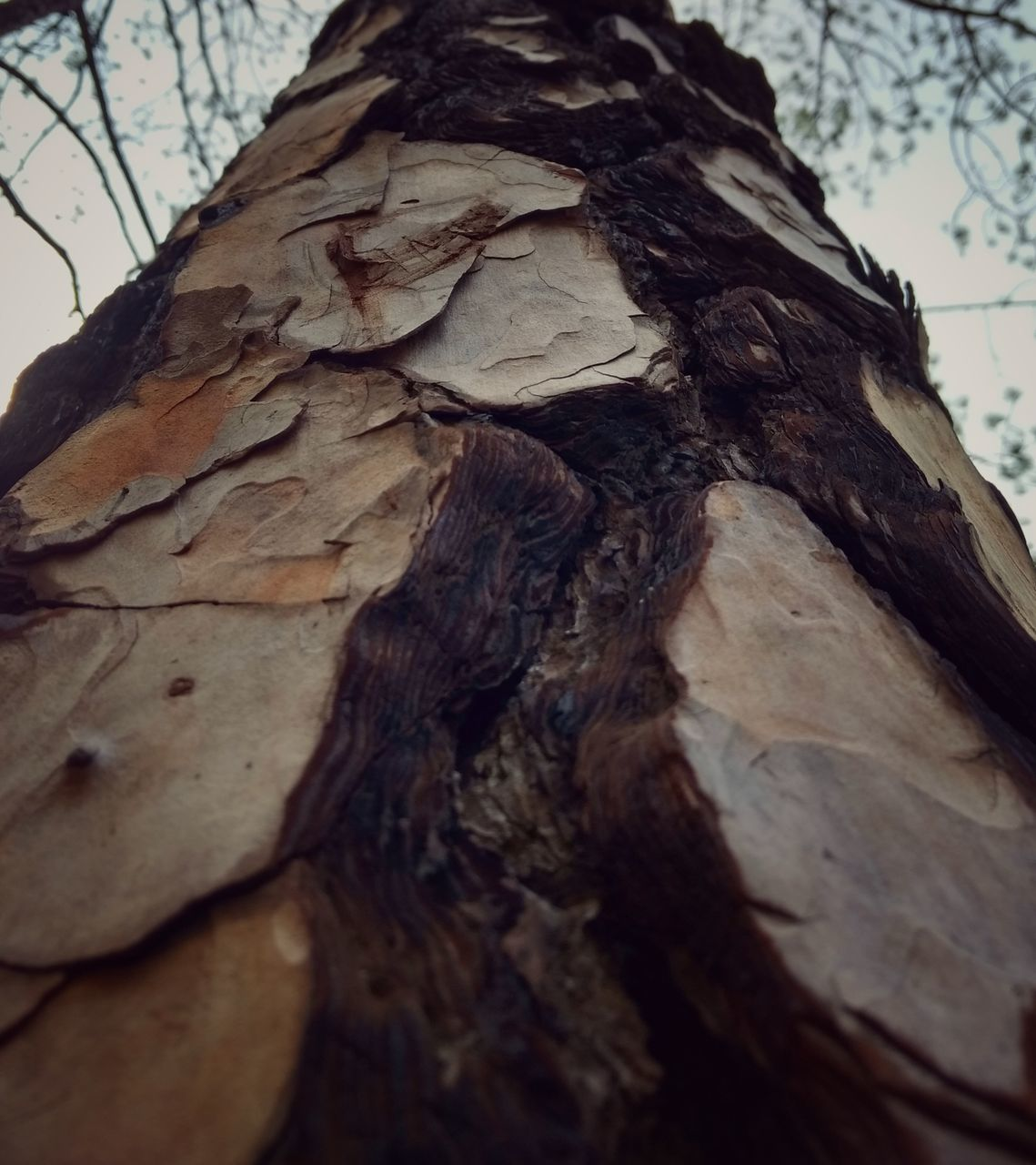tree trunk, tree, bark, nature, textured, no people, day, close-up, wood - material, outdoors, branch, growth, beauty in nature, leaf, forest, low angle view, dead tree, sky