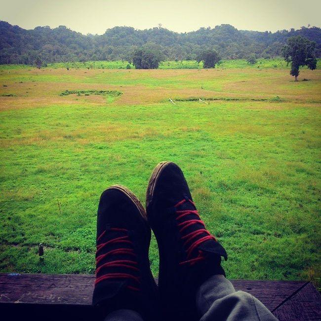 """Penakaran Hewan Satwa """"Sadengan"""" Taman Nasional Alas Purwo. Banyuwangi Alaspurwo Trip Camp VisitBanyuwangi BIRR NationalPark Wild FeedingGround Jalan2Men UploadBarengAnji"""